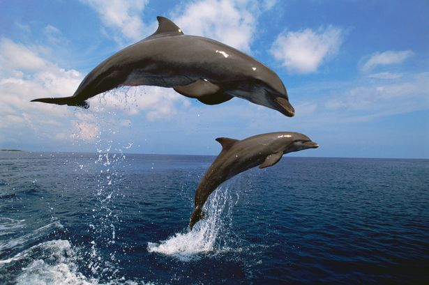 Dophin and woman sex